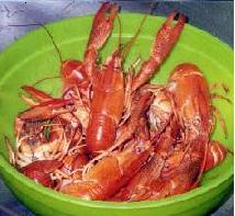 Red Swamp crayfish (cooked).. most popular Southern species for culture.
